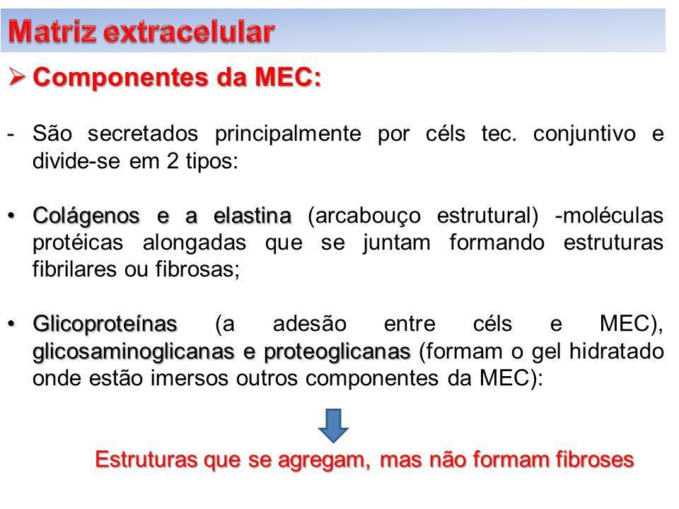  Componentes da MEC: -São secretados principalmente por céls tec. conjuntivo e divide-se em 2 tipos: Colágenos e a elastinaColágenos e a elastina (ar