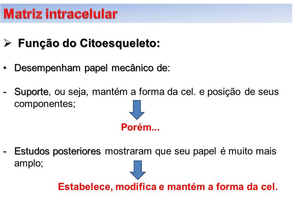  Função do Citoesqueleto: Desempenham papel mecânico de:Desempenham papel mecânico de: -Suporte -Suporte, ou seja, mantém a forma da cel. e posição d