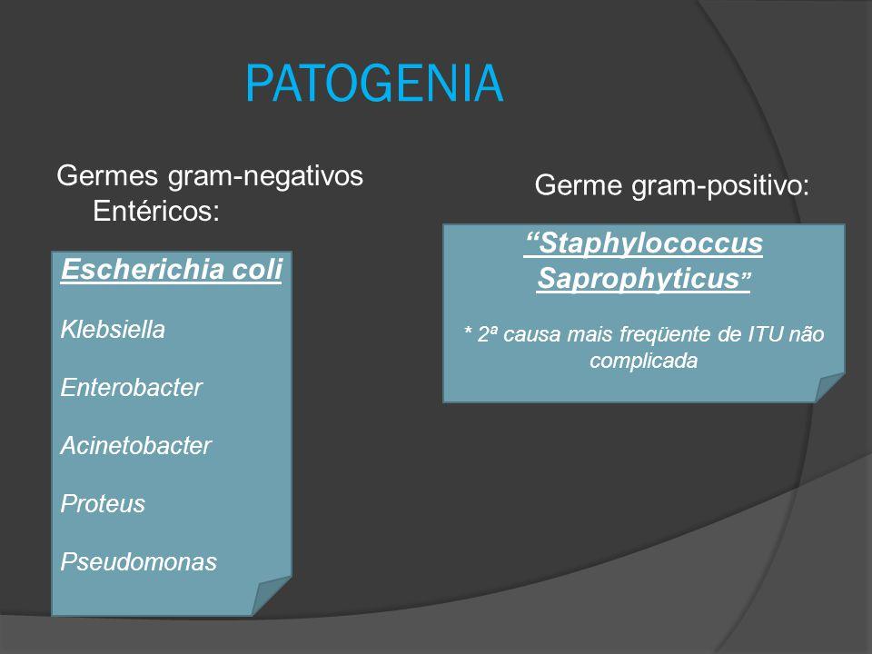 "PATOGENIA Germes gram-negativos Entéricos: Escherichia coli Klebsiella Enterobacter Acinetobacter Proteus Pseudomonas ""Staphylococcus Saprophyticus """