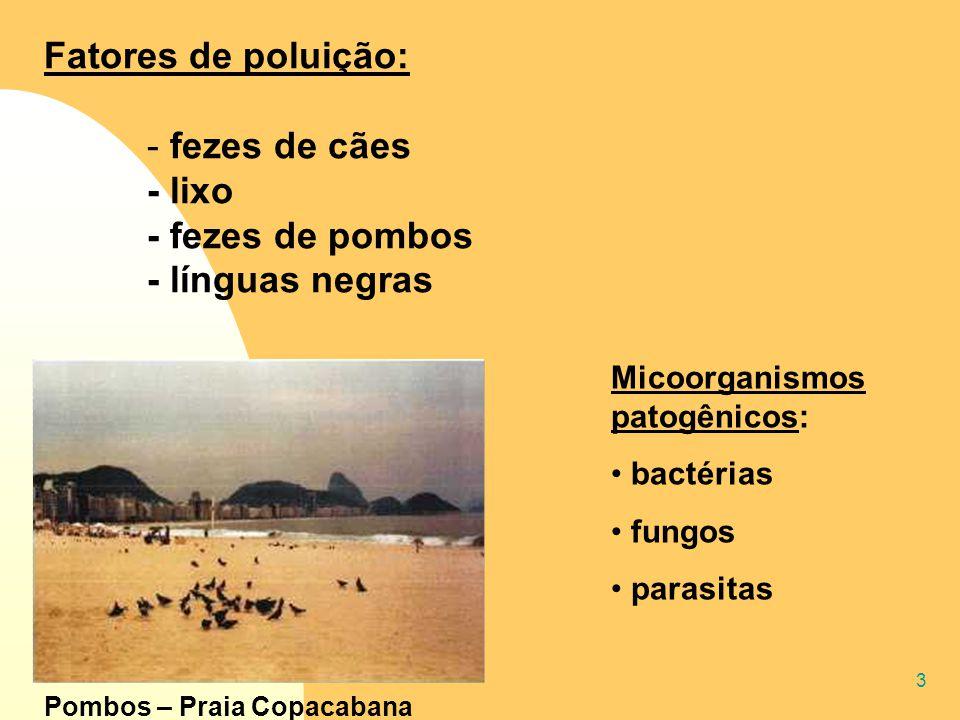 3 Fatores de poluição: - fezes de cães - lixo - fezes de pombos - línguas negras Micoorganismos patogênicos: bactérias fungos parasitas Pombos – Praia