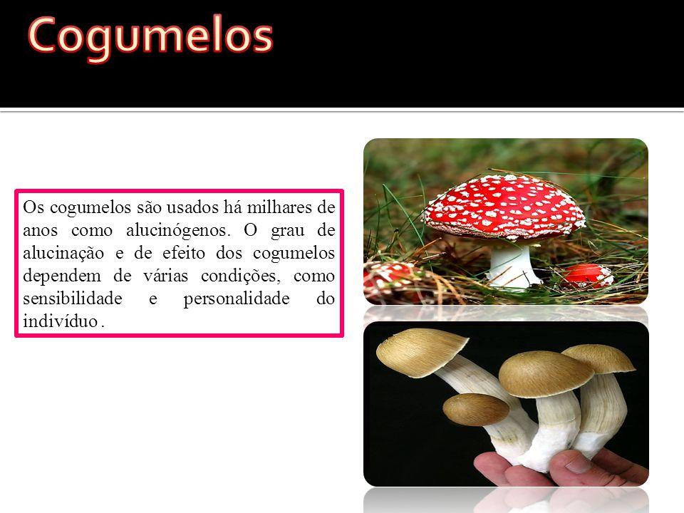 Os cogumelos são usados há milhares de anos como alucinógenos.