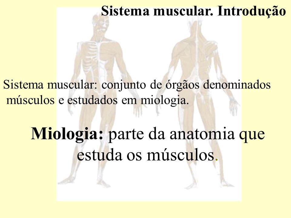 Nomenclatura dos músculos esqueléticos.Arquitetura – m.