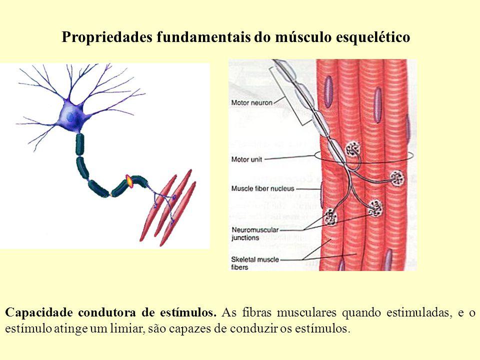 Propriedades fundamentais do músculo esquelético Capacidade condutora de estímulos.