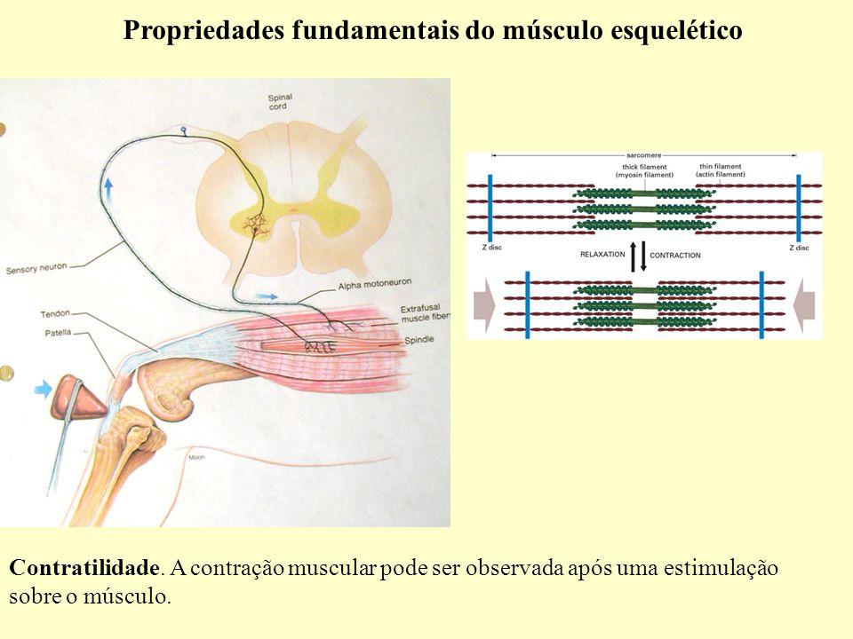 Propriedades fundamentais do músculo esquelético Contratilidade.