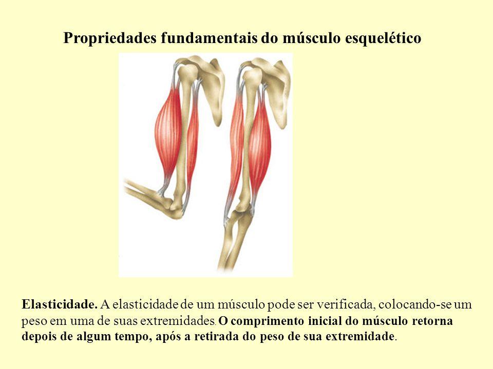 Propriedades fundamentais do músculo esquelético Elasticidade.