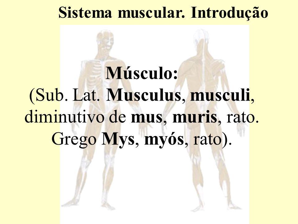 Músculo: (Sub.Lat. Musculus, musculi, diminutivo de mus, muris, rato.