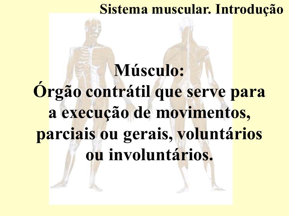 Características dos músculos esqueléticos.Variável de acordo com: Quantidade de alimento recebido.