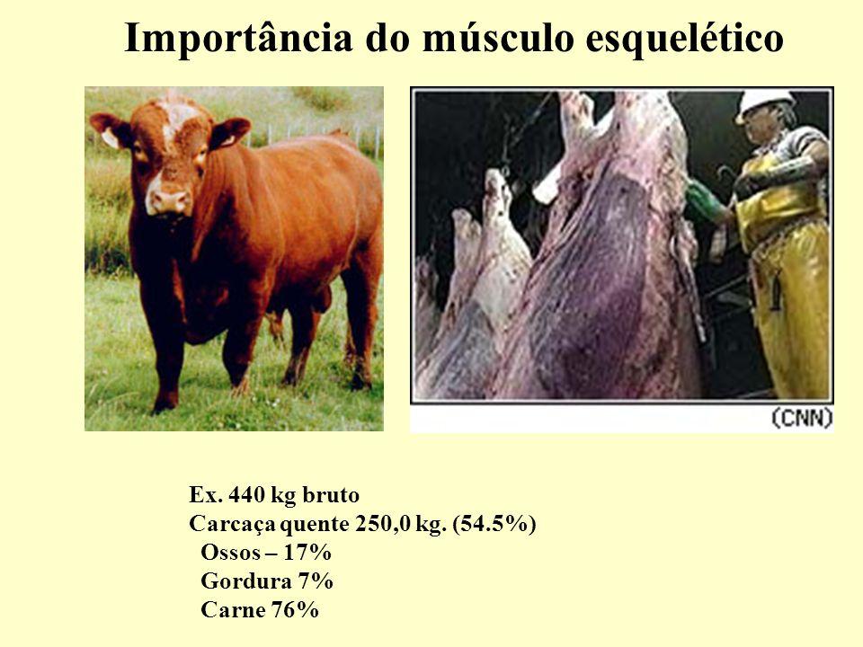 Importância do músculo esquelético Ex.440 kg bruto Carcaça quente 250,0 kg.