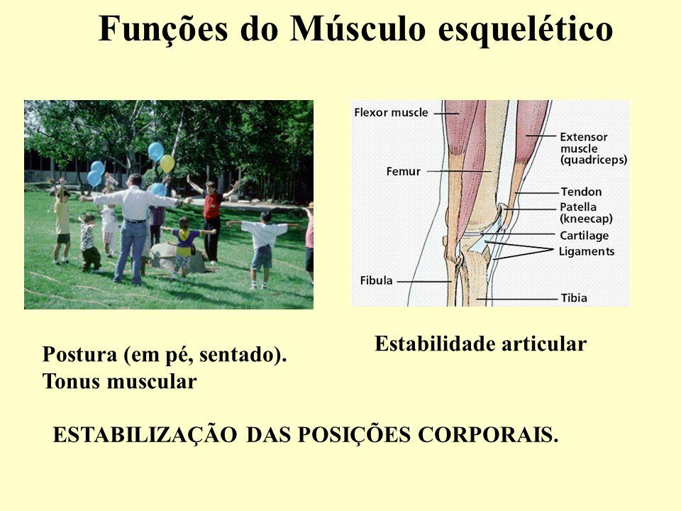 Funções do Músculo esquelético Postura (em pé, sentado).