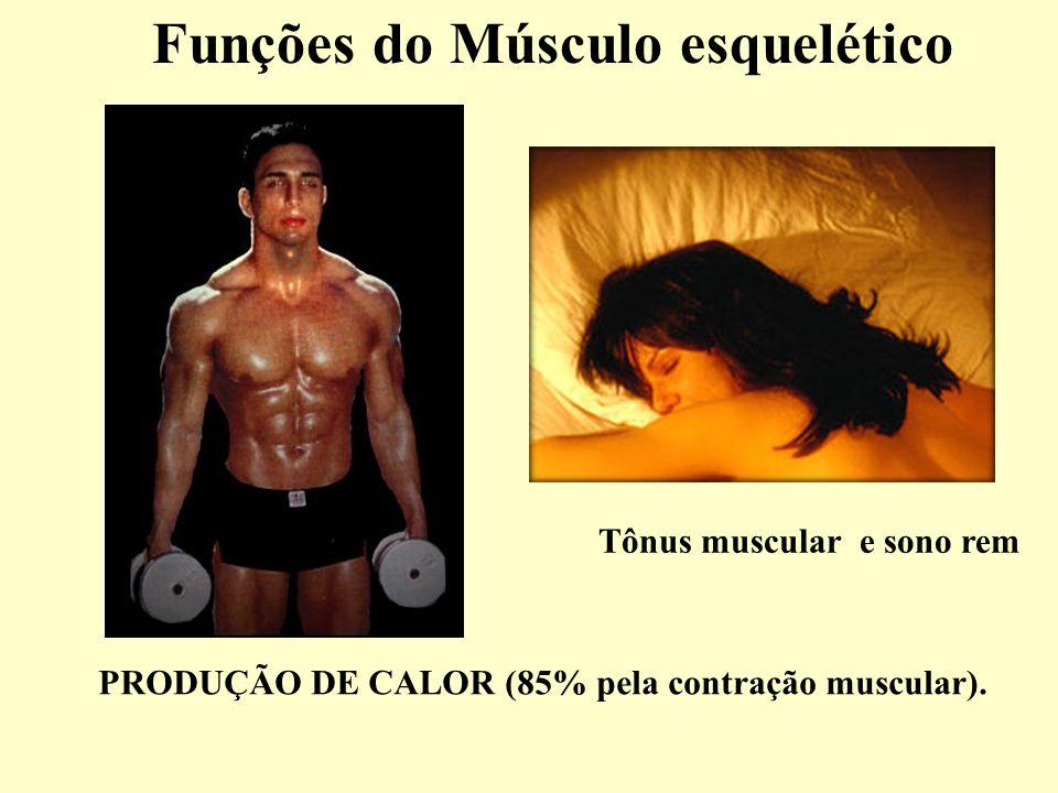 Funções do Músculo esquelético PRODUÇÃO DE CALOR (85% pela contração muscular).