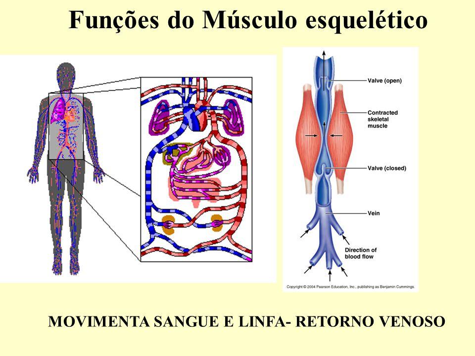 Funções do Músculo esquelético MOVIMENTA SANGUE E LINFA- RETORNO VENOSO