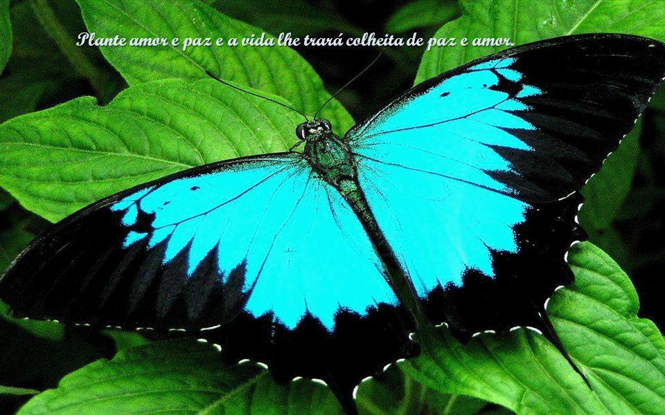 A paz em nós não resulta de circunstâncias externas e sim da nossa tranquilidade de consciência no dever cumprido.