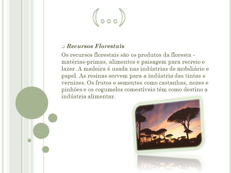  R Recursos Florestais Os recursos florestais são os produtos da floresta - matérias-primas, alimentos e paisagem para recreio e lazer. A madeira é