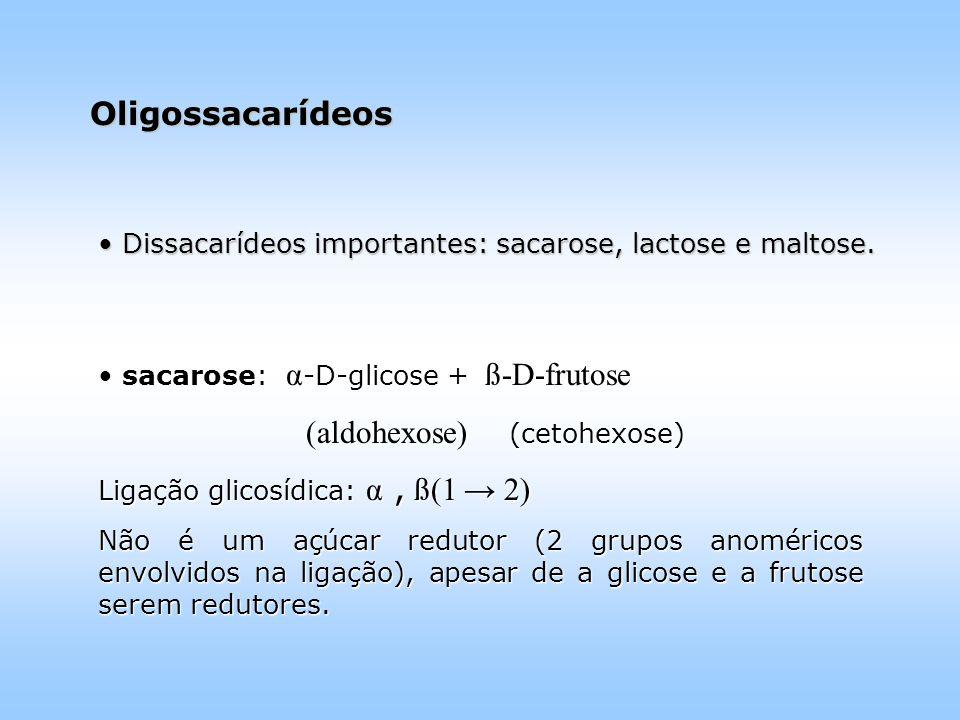 Dissacarídeos importantes: sacarose, lactose e maltose.