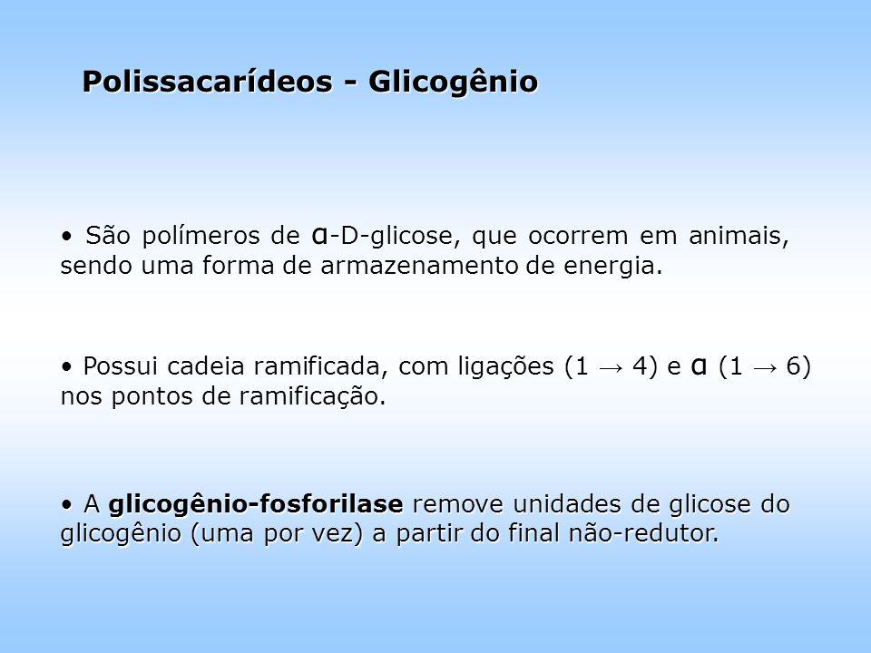 Polissacarídeos - Glicogênio São polímeros de α -D-glicose, que ocorrem em animais, sendo uma forma de armazenamento de energia.