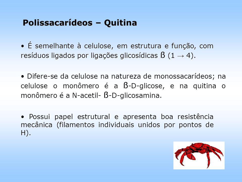 Polissacarídeos – Quitina É semelhante à celulose, em estrutura e função, com resíduos ligados por ligações glicosídicas ß (1 → 4).