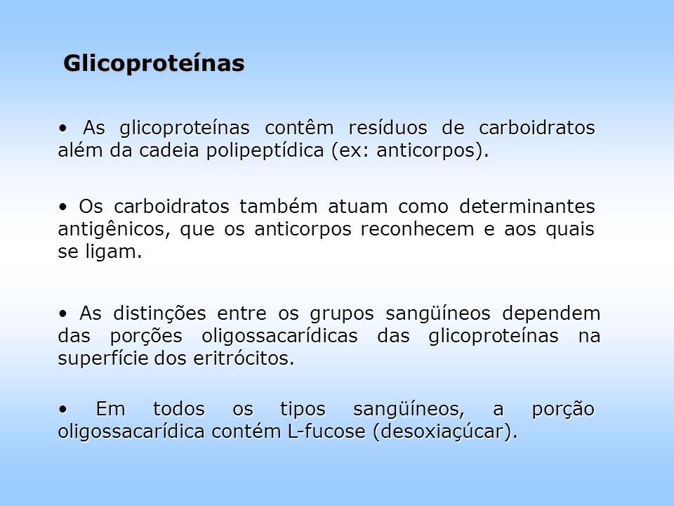 Glicoproteínas As glicoproteínas contêm resíduos de carboidratos além da cadeia polipeptídica (ex: anticorpos).