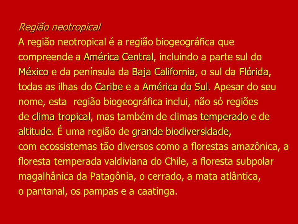 Região neotropical América Central MéxicoBaja CaliforniaFlórida CaribeAmérica do Sul clima tropicaltemperado altitudegrande biodiversidade Região neot