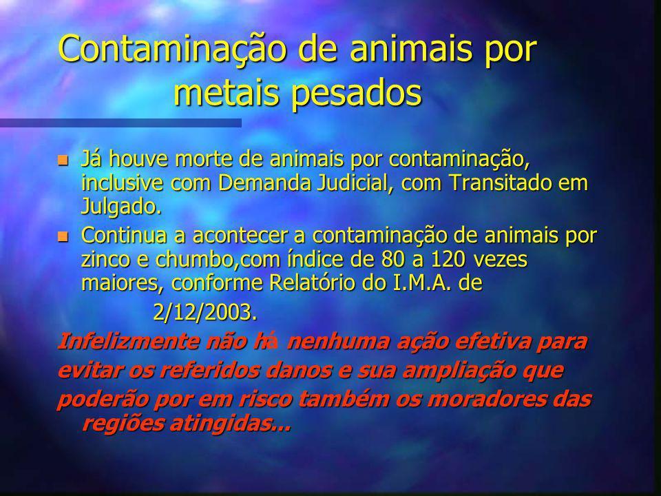 Contaminação de animais por metais pesados n Já houve morte de animais por contaminação, inclusive com Demanda Judicial, com Transitado em Julgado.