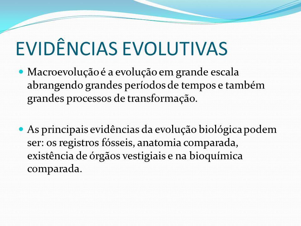 EVIDÊNCIAS EVOLUTIVAS Macroevolução é a evolução em grande escala abrangendo grandes períodos de tempos e também grandes processos de transformação. A