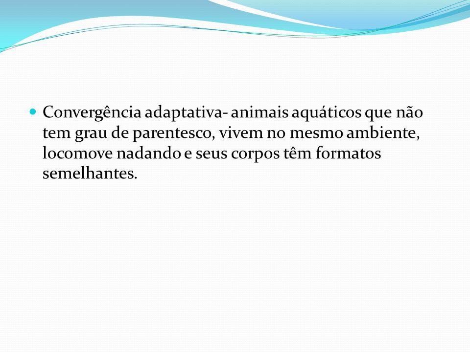 Convergência adaptativa- animais aquáticos que não tem grau de parentesco, vivem no mesmo ambiente, locomove nadando e seus corpos têm formatos semelh