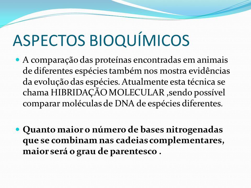 ASPECTOS BIOQUÍMICOS A comparação das proteínas encontradas em animais de diferentes espécies também nos mostra evidências da evolução das espécies. A