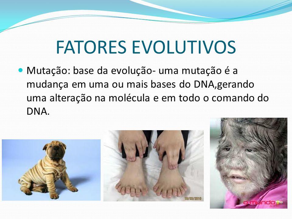 FATORES EVOLUTIVOS Mutação: base da evolução- uma mutação é a mudança em uma ou mais bases do DNA,gerando uma alteração na molécula e em todo o comand