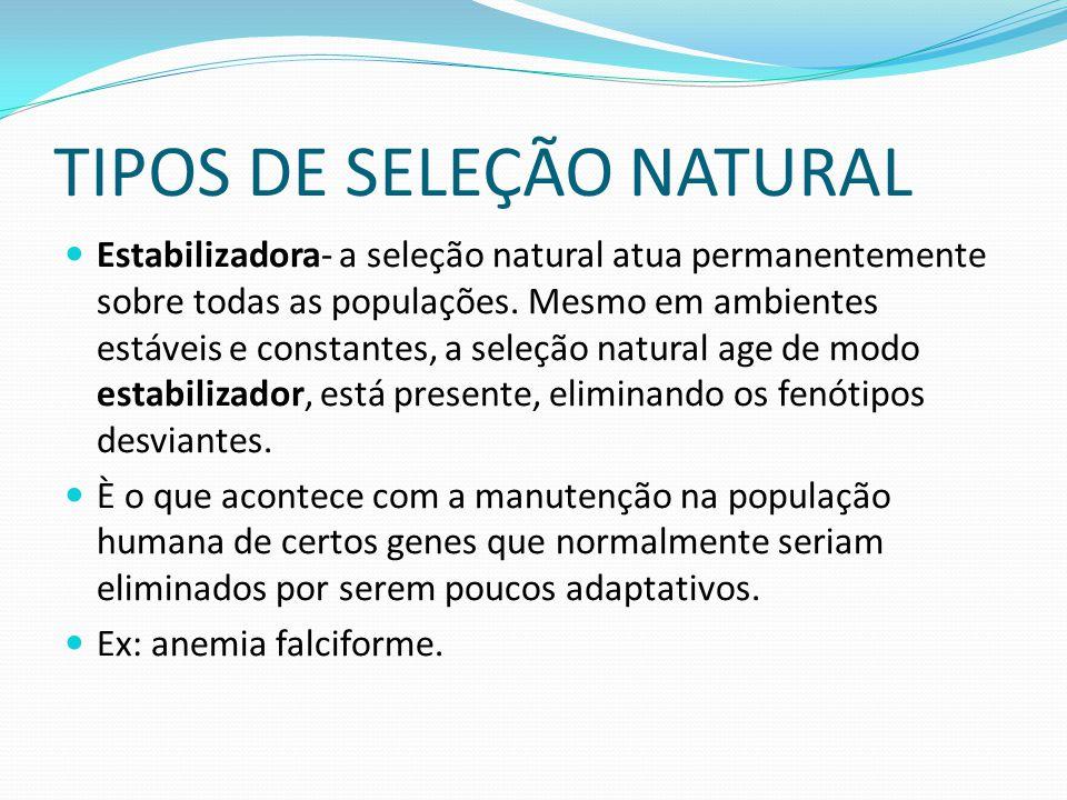 TIPOS DE SELEÇÃO NATURAL Estabilizadora- a seleção natural atua permanentemente sobre todas as populações. Mesmo em ambientes estáveis e constantes, a