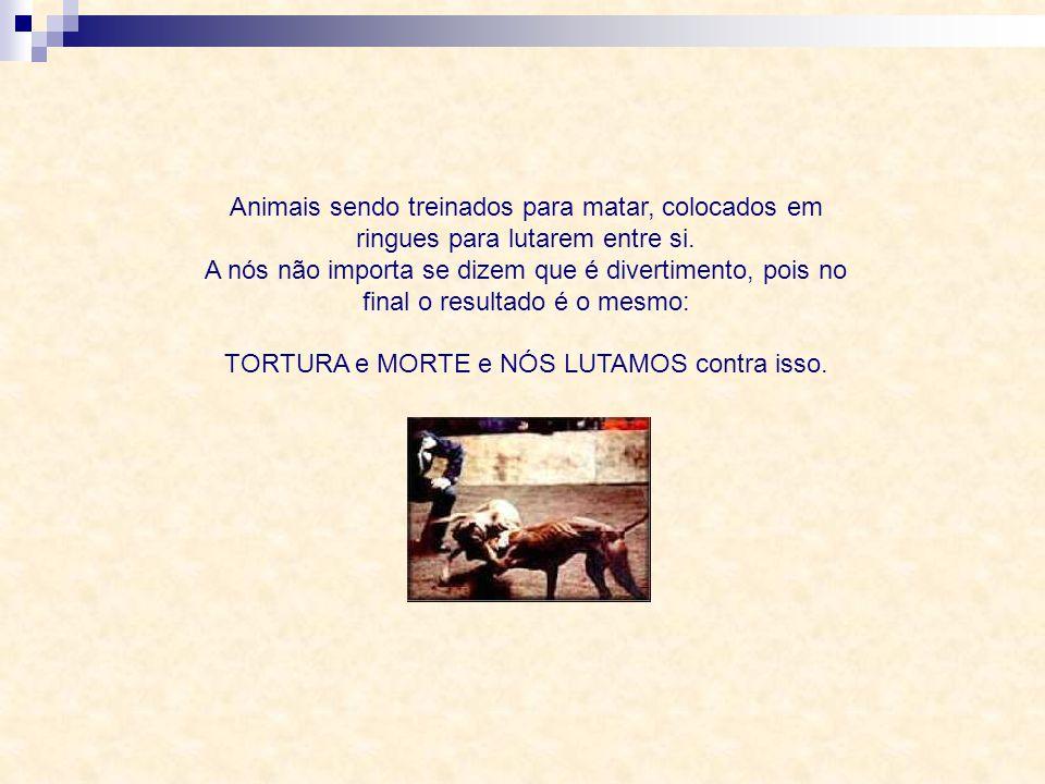Animais sendo obrigados a puxar cargas excessivas, chicoteados exaustivamente, animais vistos como objeto de trabalho. A nós não importa a finalidade,