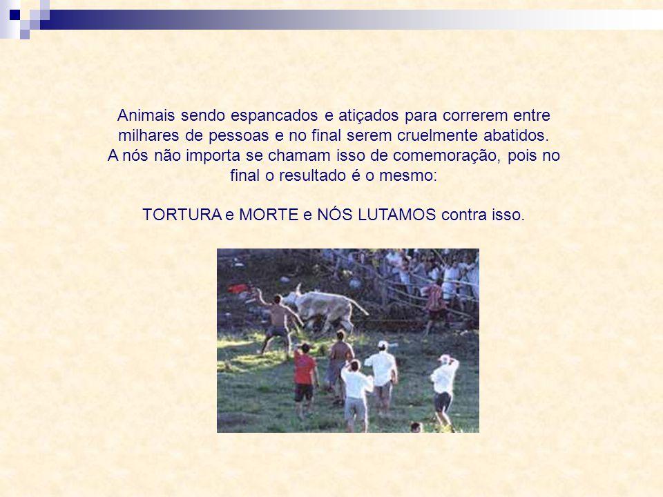 Animais sendo cruelmente torturados para aparentarem braveza, sendo montados, laçados, derrubados em arenas. A nós não importa se consideram isso um e