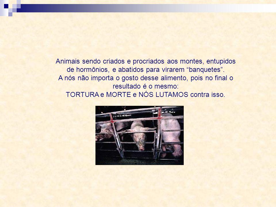 Animais sendo espancados e atiçados para correrem entre milhares de pessoas e no final serem cruelmente abatidos. A nós não importa se chamam isso de
