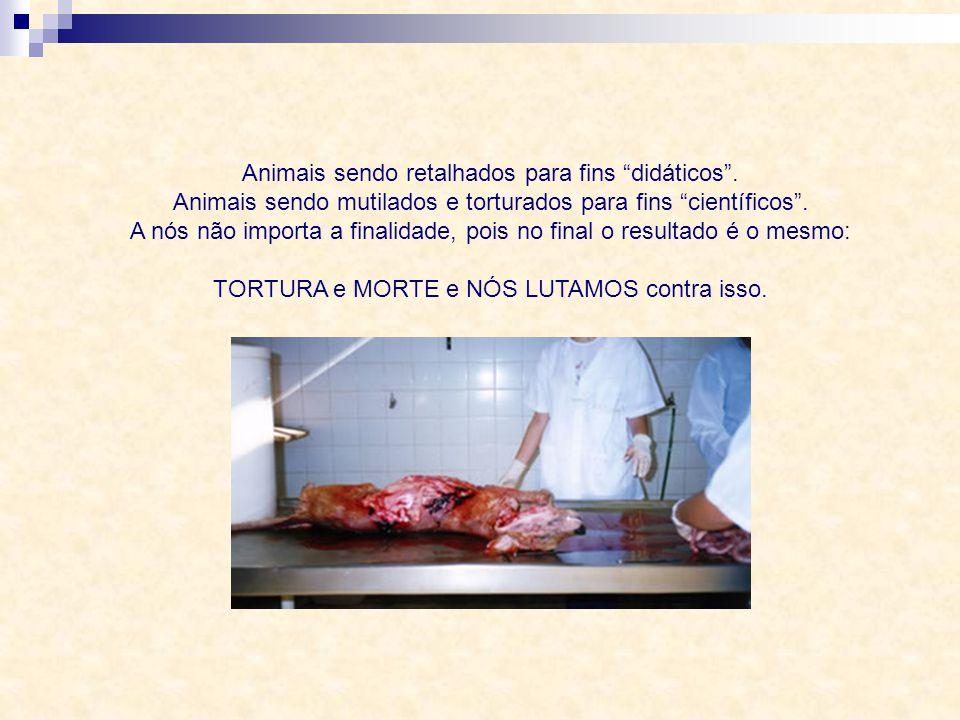 A Nossa Luta! Mensagem da PEA – Projeto Esperança Animal Autoria: Gabriela Toledo Rildo Silveira Created by rildosilveira@yahoo.com.br Cruzília – MG –