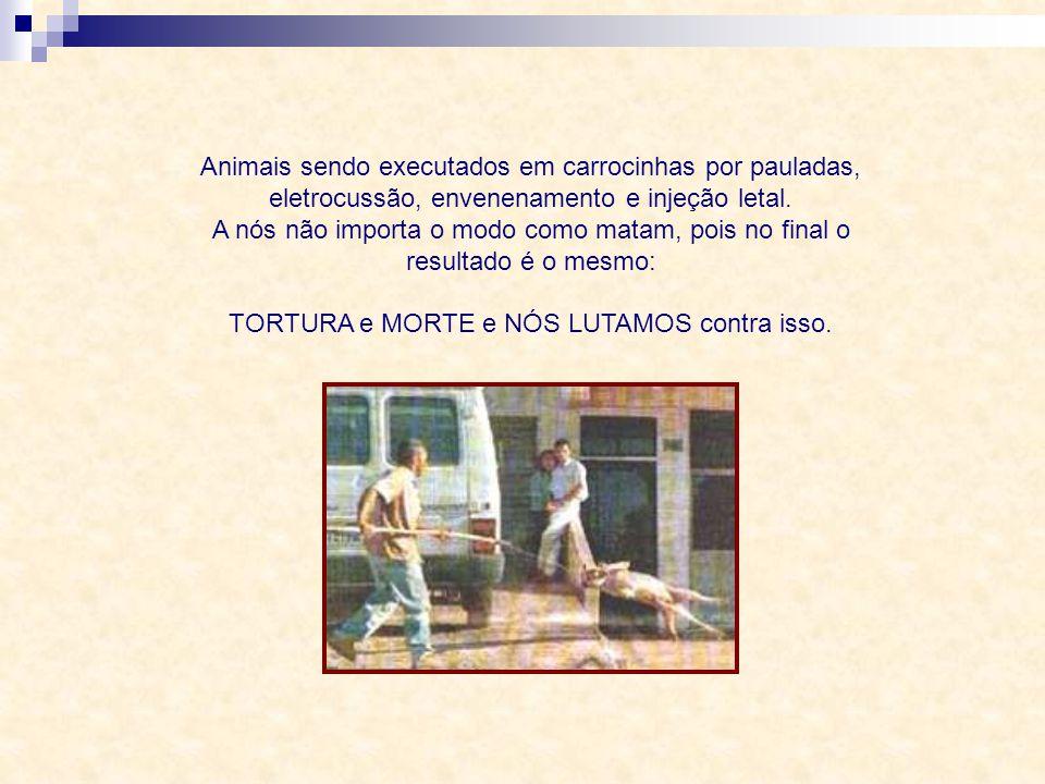 Animais sendo executados em carrocinhas por pauladas, eletrocussão, envenenamento e injeção letal.