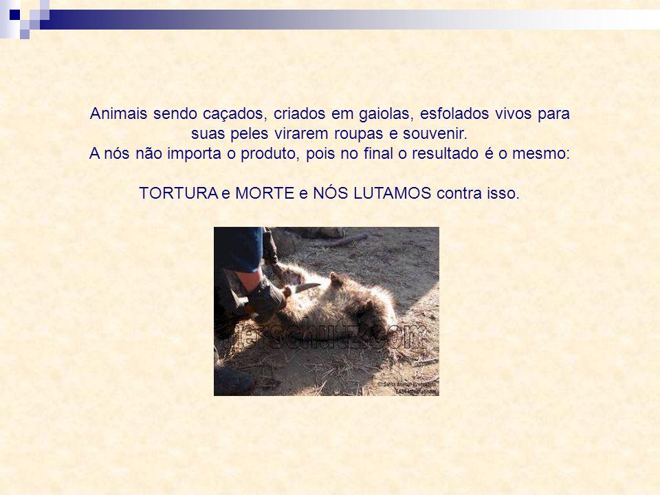 Animais sendo caçados, criados em gaiolas, esfolados vivos para suas peles virarem roupas e souvenir.