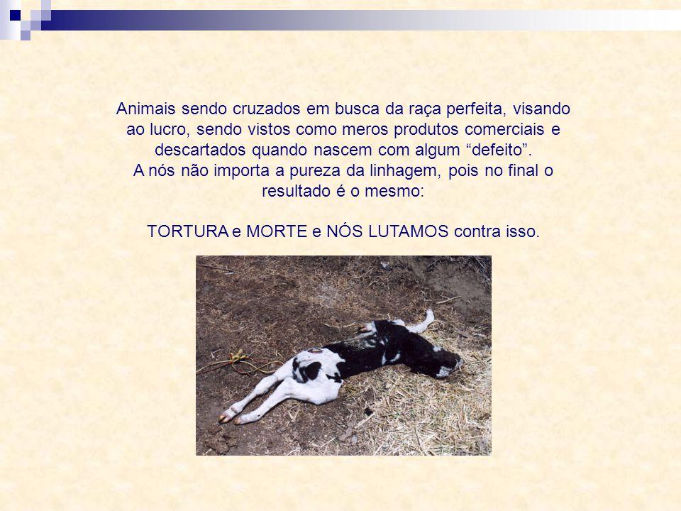 Animais sendo cruzados em busca da raça perfeita, visando ao lucro, sendo vistos como meros produtos comerciais e descartados quando nascem com algum defeito .