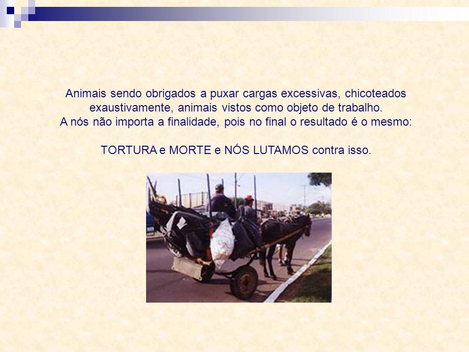 Animais sendo obrigados a puxar cargas excessivas, chicoteados exaustivamente, animais vistos como objeto de trabalho.