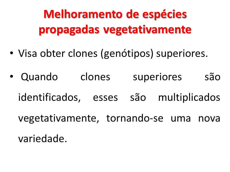 Melhoramento de espécies propagadas vegetativamente Visa obter clones (genótipos) superiores. Quando clones superiores são identificados, esses são mu