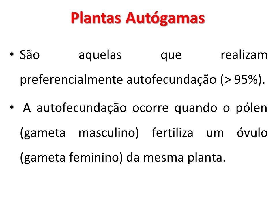 Plantas Autógamas São aquelas que realizam preferencialmente autofecundação (> 95%). A autofecundação ocorre quando o pólen (gameta masculino) fertili