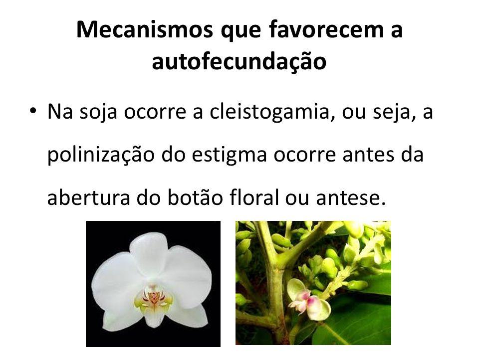 Mecanismos que favorecem a autofecundação Na soja ocorre a cleistogamia, ou seja, a polinização do estigma ocorre antes da abertura do botão floral ou