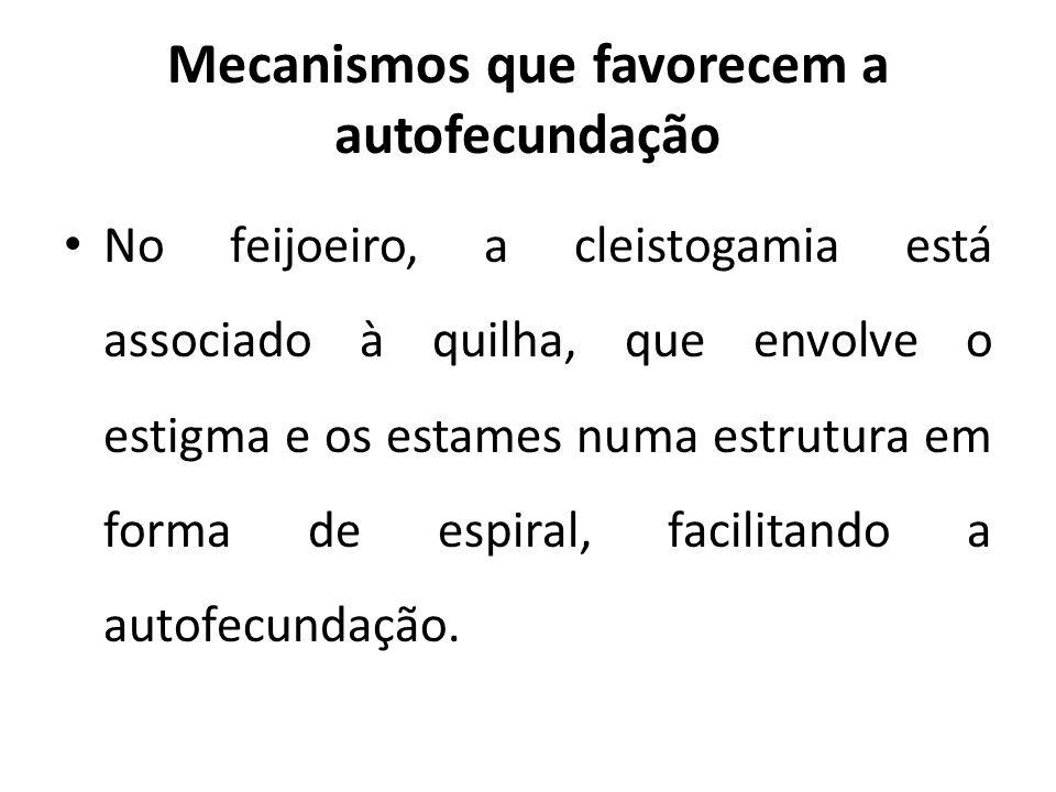 Mecanismos que favorecem a autofecundação No feijoeiro, a cleistogamia está associado à quilha, que envolve o estigma e os estames numa estrutura em f