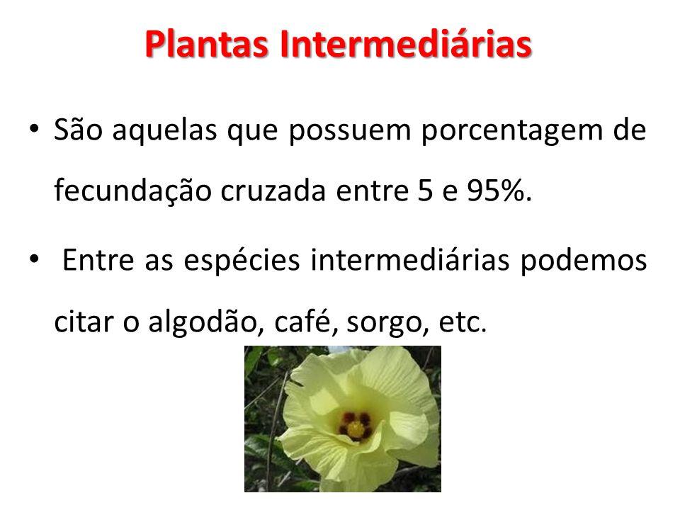 Plantas Intermediárias São aquelas que possuem porcentagem de fecundação cruzada entre 5 e 95%. Entre as espécies intermediárias podemos citar o algod
