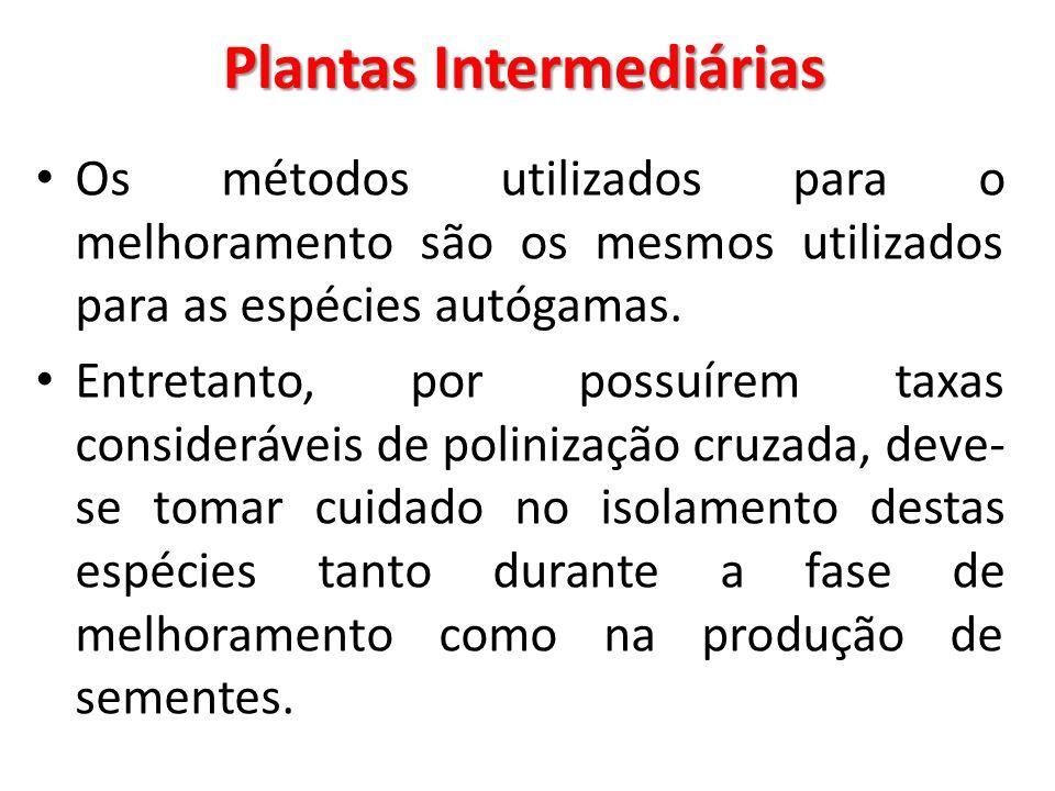 Plantas Intermediárias Os métodos utilizados para o melhoramento são os mesmos utilizados para as espécies autógamas. Entretanto, por possuírem taxas