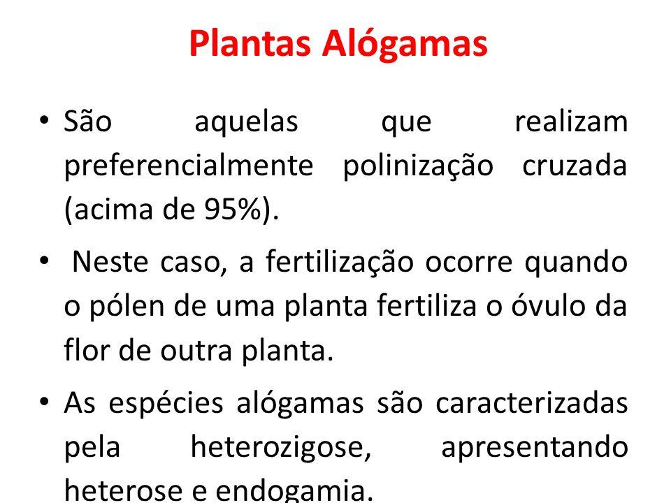 Plantas Alógamas São aquelas que realizam preferencialmente polinização cruzada (acima de 95%). Neste caso, a fertilização ocorre quando o pólen de um