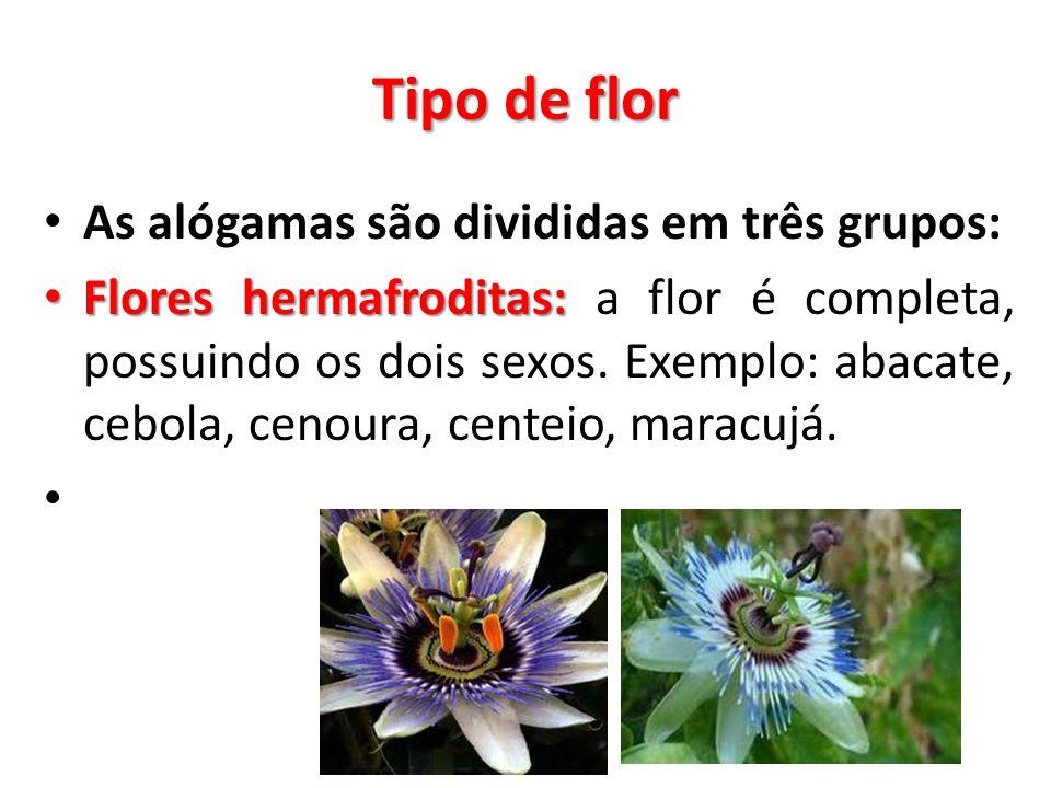 Tipo de flor As alógamas são divididas em três grupos: Flores hermafroditas: Flores hermafroditas: a flor é completa, possuindo os dois sexos. Exemplo