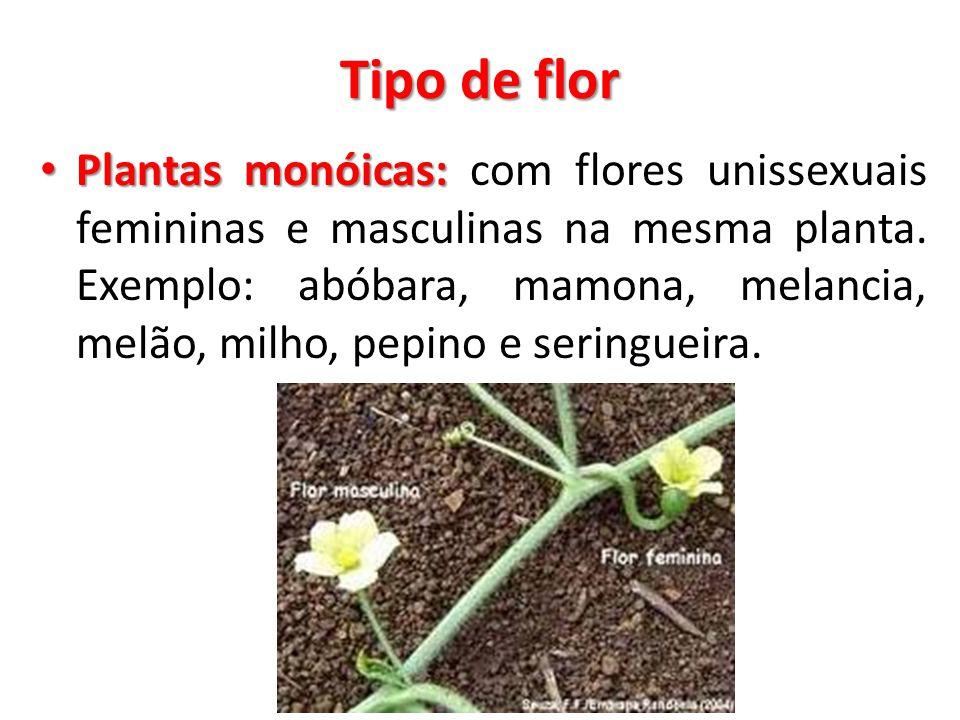 Tipo de flor Plantas monóicas: Plantas monóicas: com flores unissexuais femininas e masculinas na mesma planta. Exemplo: abóbara, mamona, melancia, me