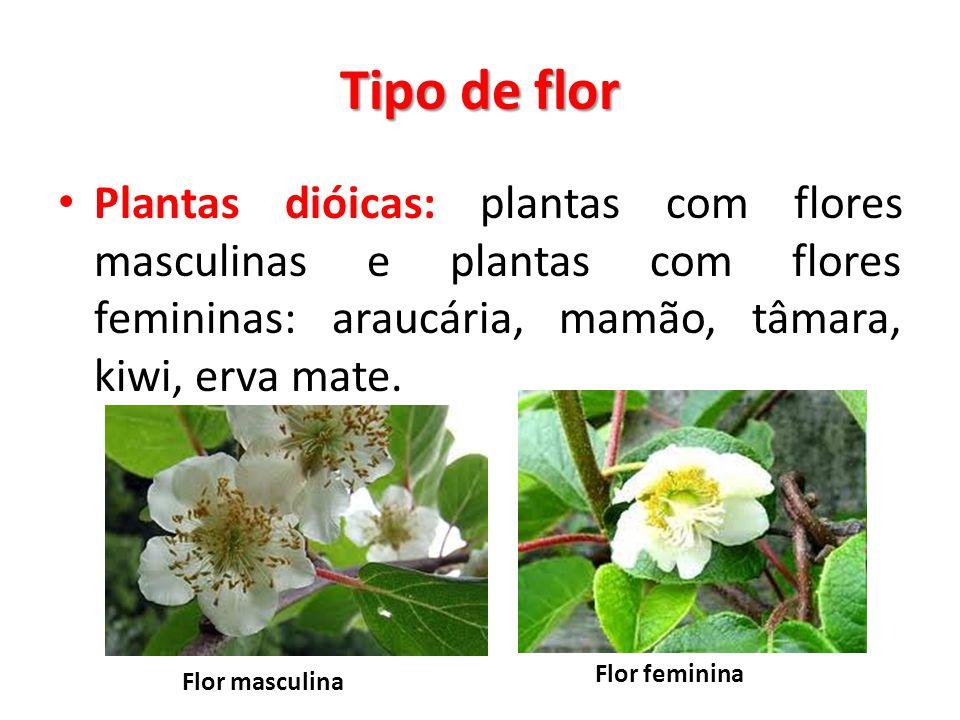 Tipo de flor Plantas dióicas: plantas com flores masculinas e plantas com flores femininas: araucária, mamão, tâmara, kiwi, erva mate. Flor masculina
