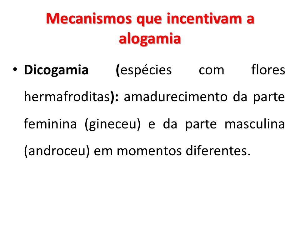 Mecanismos que incentivam a alogamia Dicogamia (espécies com flores hermafroditas): amadurecimento da parte feminina (gineceu) e da parte masculina (a