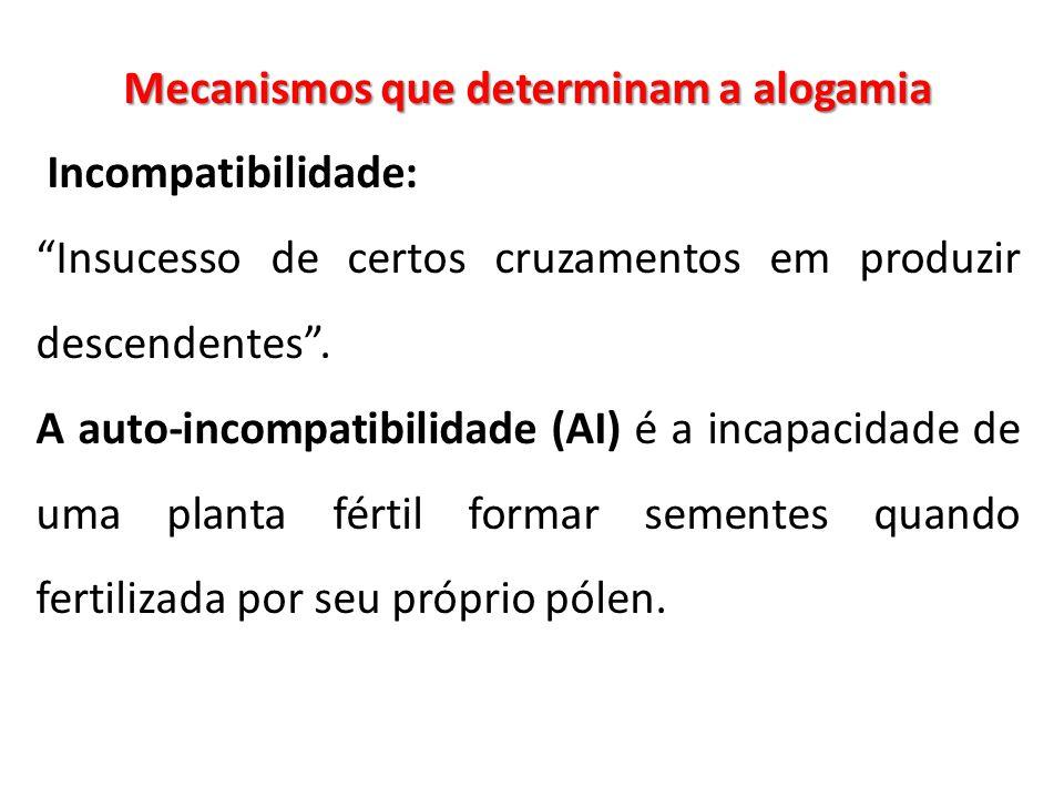 """Mecanismos que determinam a alogamia Incompatibilidade: """"Insucesso de certos cruzamentos em produzir descendentes"""". A auto-incompatibilidade (AI) é a"""