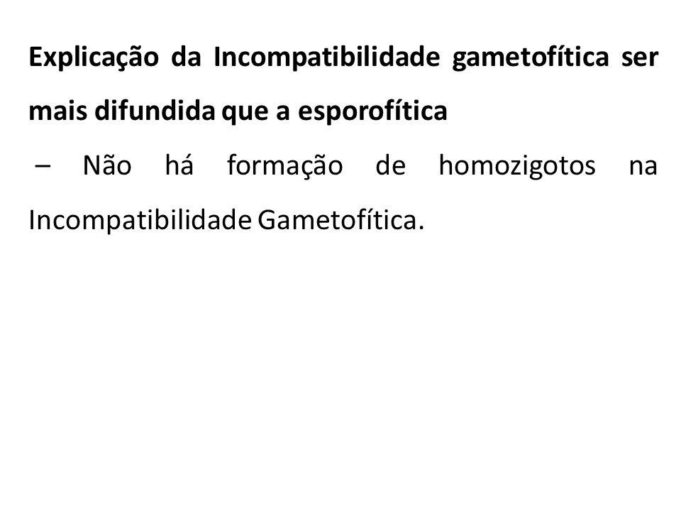 Explicação da Incompatibilidade gametofítica ser mais difundida que a esporofítica – Não há formação de homozigotos na Incompatibilidade Gametofítica.