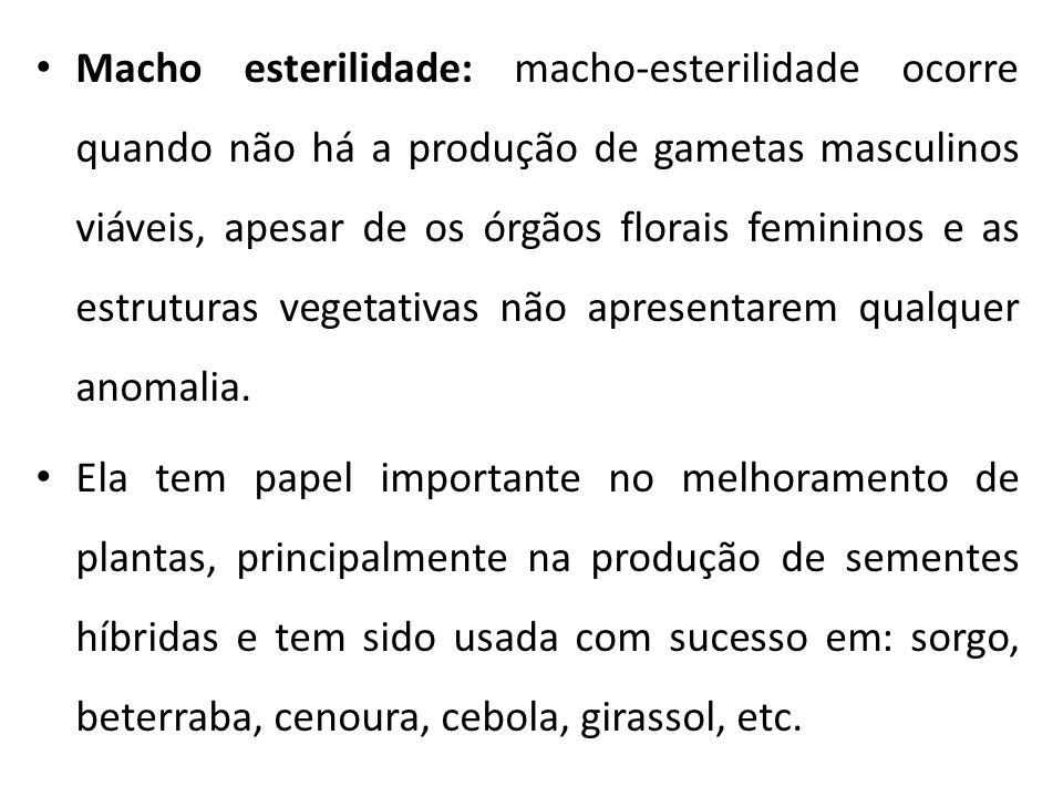 Macho esterilidade: macho-esterilidade ocorre quando não há a produção de gametas masculinos viáveis, apesar de os órgãos florais femininos e as estru